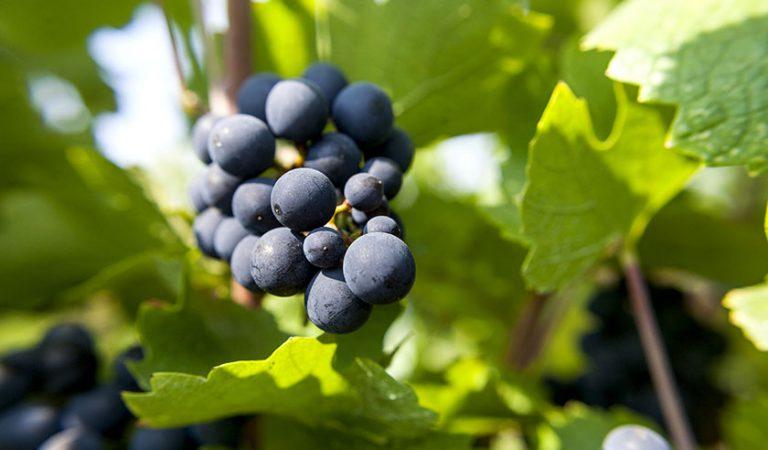 Domaine Theulot Juillot - Bon vin Beau Raisin
